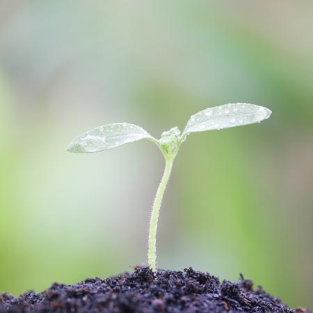 Sadzenie i pielęgnacja